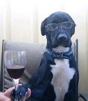Hond met glas wijn