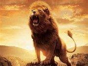 LionAM