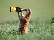 drunk chipmunk