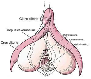clitoris kapje